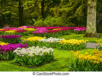 Garden in Keukenhof, colorful tulip flowers and trees. Netherlands