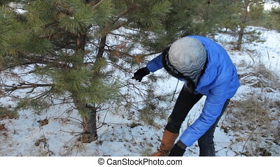 Woman cuts off the branches by pruner. At the right side....