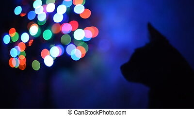 Silhouette of a cat. - Silhouette of a cat on a background...
