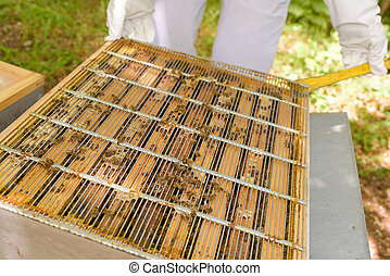 beekeeper and a grille