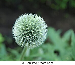 Peculiar round and symmetric flower ball
