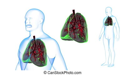Human Body Lungs X-ray effects Loop Rotation. 3D render