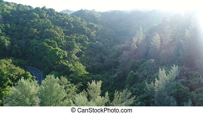 Aerial video above tropical forest in sunny day - Aerial...