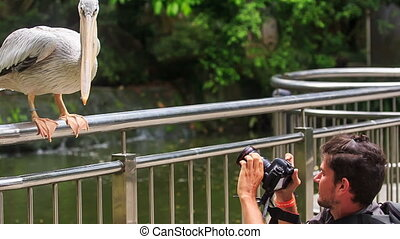 Closeup Pelican Stands on Bridge Rail Attacks Tourist -...