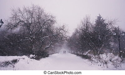 Two people are on the snow-covered forest - Two women walk...