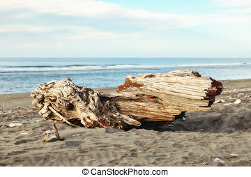 Hokitika Beach - West Coast - Driftwood on the Hokitika...