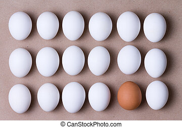 Rows of fresh white eggs with one brown one