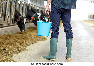 man with bucket in cowshed on dairy farm - agriculture...
