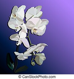White geometric orchid