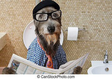 Irish wolfhound dog in a toilet - Humorous picture of a...