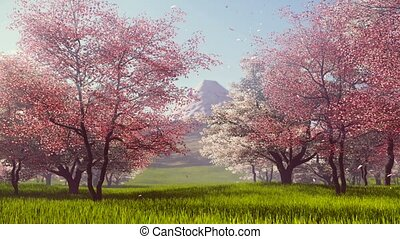 Mount Fuji and flowering cherry trees - Pink petals falling...