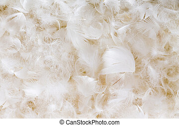 Light fluffy white feather background texture of goose or...
