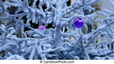 Christmas decoration with snow and branch of Christmas tree