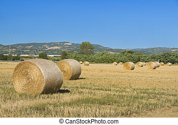 Rolling haystacks in countryside