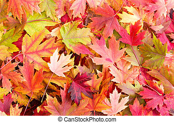 Dry Bed of Colorful Autumn Leaves on the Ground Fallen from...