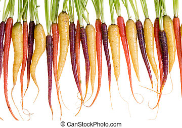 Row of freshly washed colorful carrots - Row of freshly...