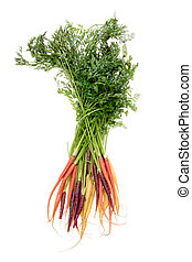 Colorful bunch of assorted varieties of carrots - Colorful...