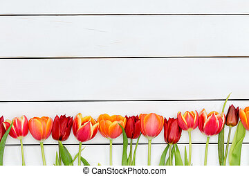 Bottom border of colorful red and orange tulips - Bottom...