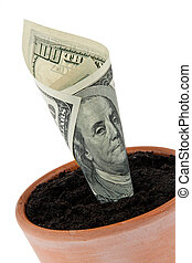 Dollar bill in flower pot. Interest rates, growth. - A...