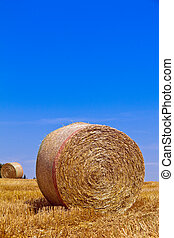 Agriculture. Field with bales of straw after harvest.