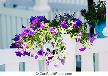 purple flowers as decoration fence, note shallow depth of...
