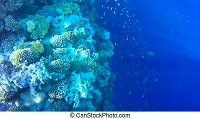view of the coral Underwater.