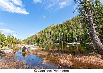 Mountain river and evergreen forest on each side at Estes...