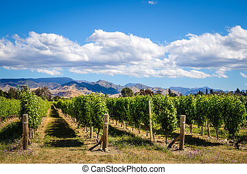 Landscape view of vineyard in Marlborough wine country, NZ -...