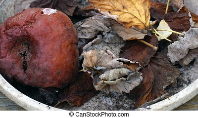 rotten apple with leaves in a bowl - a rotten apple with...