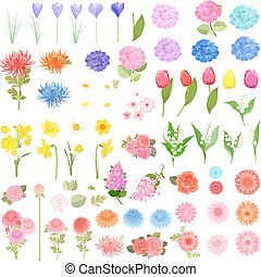 collection of different lovely spring flowers for your design