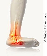 Ankle painful - skeleton x-ray.
