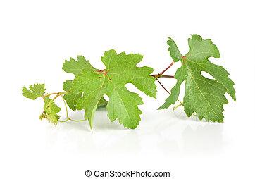 uva, folhas, isolado
