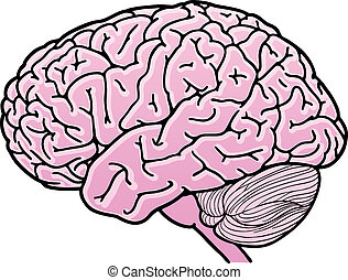 Human brain - Vector illustration of a human brain