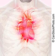 3D illustration of Heart, medical concept. - 3D illustration...