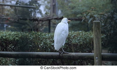 strange white bird sit at edging at cage