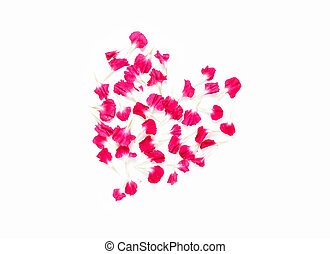 Carnations flowers in heart shape arrangment on white background.