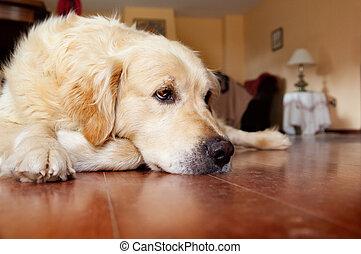 Thinking dog - Meditating sympathetic portrait of dog