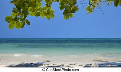 Exotic tropical beach - Peaceful tropical beach in the...