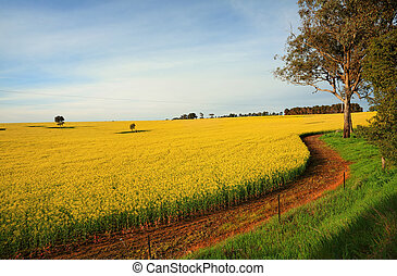 Hectares of agricultural Canola Plants in flower