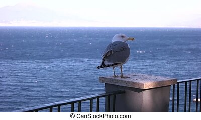 Seagull on a blue sea.