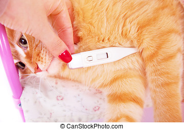 Red cat lying with a thermometer. The concept of veterinary and animal health.