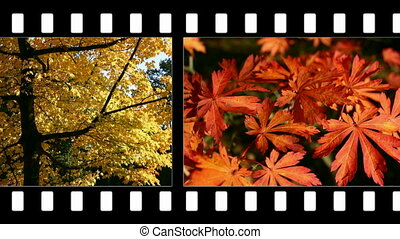 Autumn colour - autumn colour in animated style
