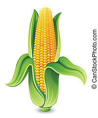 u0421orn - Vector illustration - Corn ear isolated on white