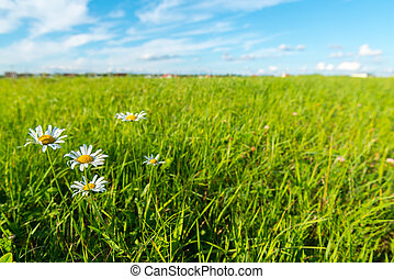 Green grass and white clouds - environmental protection...