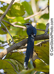 Image of bird perched on a tree branch. (Green-billed...