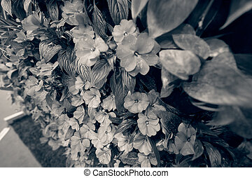 purple flowers with green leaves, note shallow depth of...