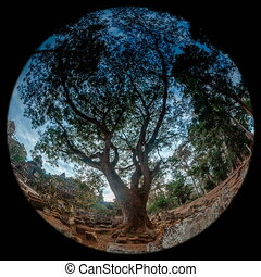 thailand tree timelapse on fisheye lens uhd