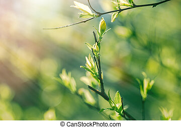 Spring leaves in the forest - Nature wakes up - spring...