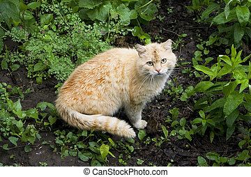 Shy cat in grass. Red cat on the ground.