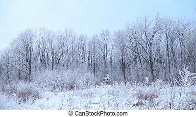 trees covered with snow - Trees covered with snow against...